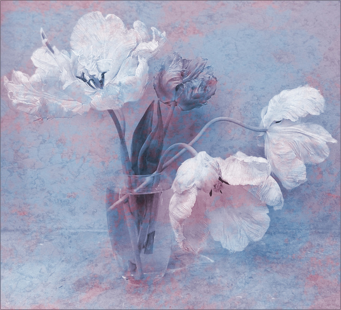 """""""Variation on a theme of tulips"""""""